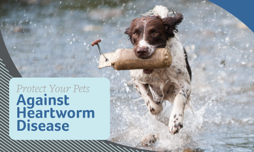 Protect Your Pets Against Heartworm Disease