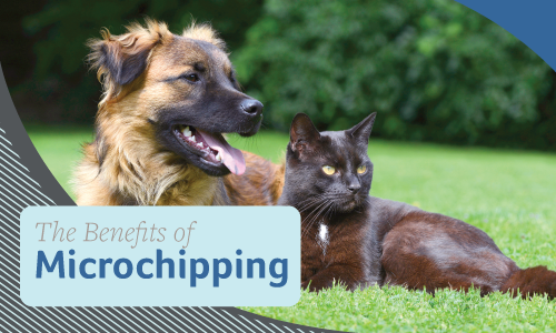 The Benefits of Microchipping