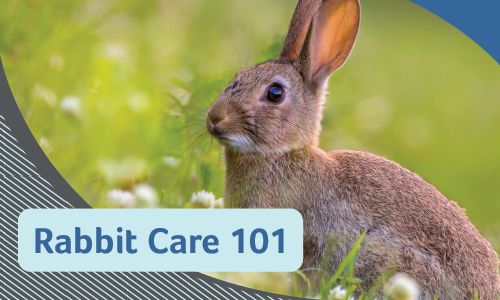 Rabbit Care 101