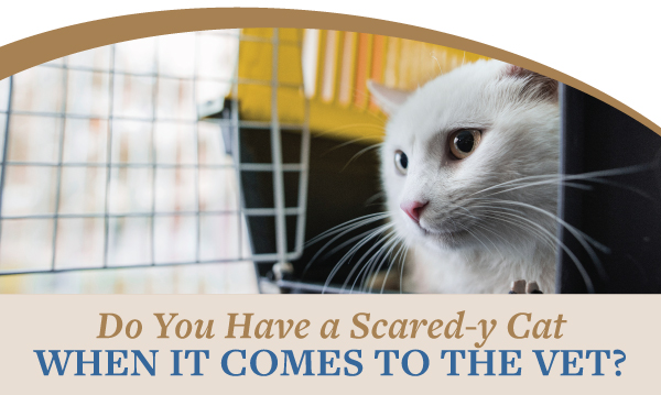 Do you have a scared-y cat when it comes to the vet?