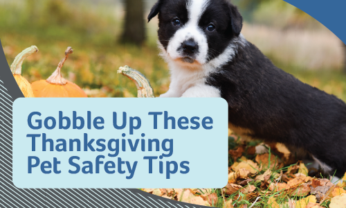 Thanksgiving Safety Tips | Glendale Animal Hospital