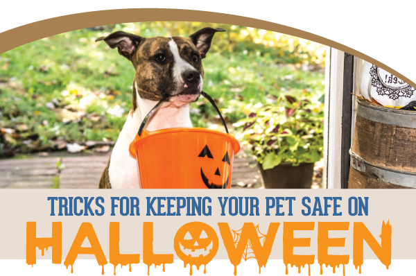 Halloween Pet Safety Tips | Glendale Animal Hospital