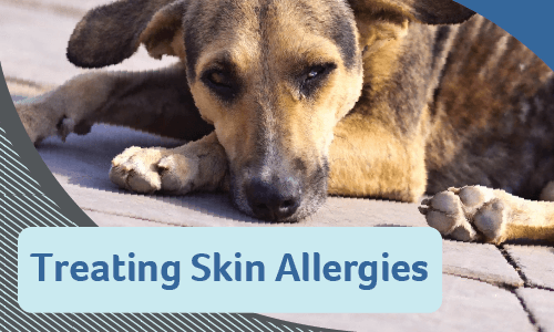 Treating Skin Allergies