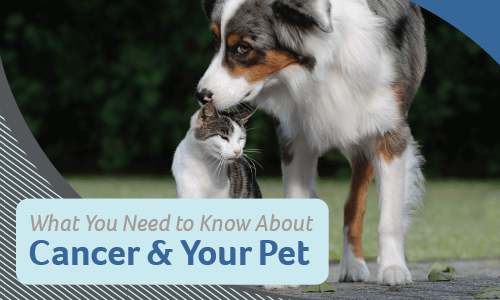 What You Need to Know About Cancer & Your Pet
