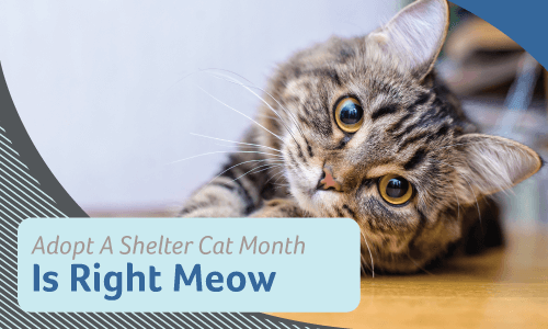Adopt a Shelter Cat Month is Right Meow