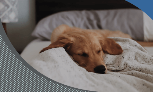 Protect Your Puppy from Deadly Viruses
