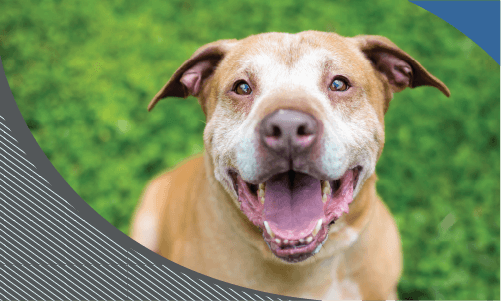 Does your pet have ortho issues?